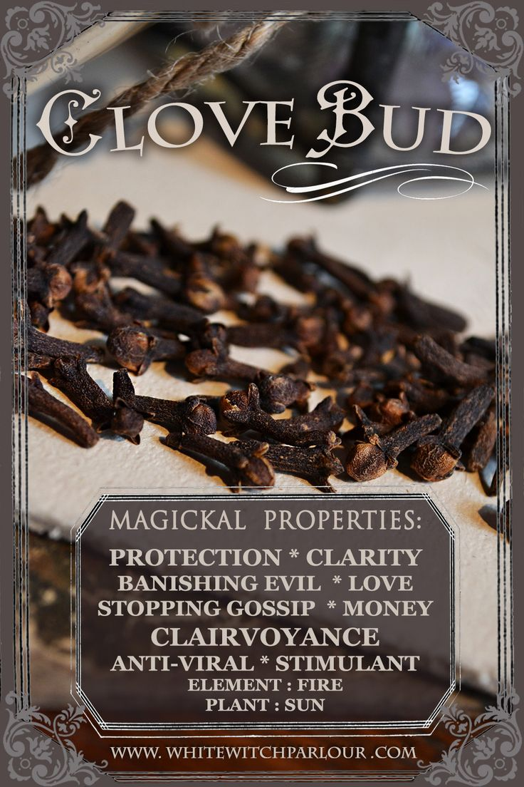 #clove #buds #herbal #botanical #spell #ingredients #wicca #white #witch #natural #bookofshadows #moonphases #magick #magic #spells #tarotcards #runicStones #intuition