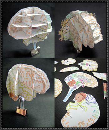 Science Paper Model - Brain Atlas Free Paper Craft Download | PaperCraftSquare.com