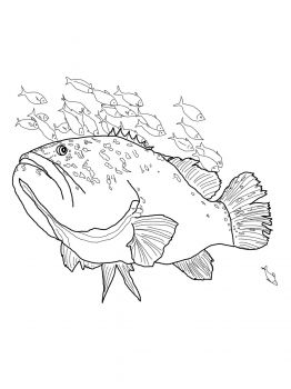 Giant Grouper Coloring Page From Category Select 25887 Printable Crafts Of Cartoons Nature Animals Bible And Many More