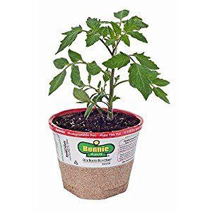 Amazon.com : Bonnie Plants 0201 Better Boy Tomato Vegetable Plant : Patio, Lawn & Garden