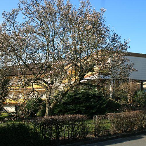 Gut laufendes Appartmenthaus in Bad Krozingen in der Nähe von der Therme