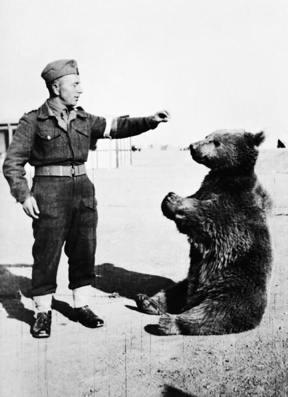 Cub found in Iran was adopted by soldiers.To get Wojtek (bear) on a British transport ship he was officially drafted corporal in Polish Army. Numerous accounts of the Battle of Monte Cassino, Wojtek helped by transporting ammunition – never dropping a single crate. In recognition of the bear's popularity, the HQ approved an effigy of a bear holding an artillery shell as the official emblem of the 22nd Co then renamed to 22nd Transport Co.