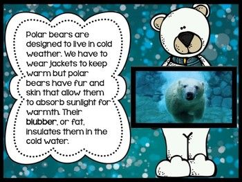 *FREEBIE* Chillin' Out With Polar Bears - A fun polar bear informational book/PowerPoint presentation.