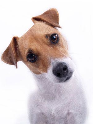 Ever wonder what your dog is really trying to tell you? Learn how to understand what your pooch is really trying to say! #pets #tips