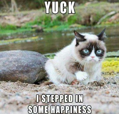 20 Of The Funniest Grumpy Cat Memes