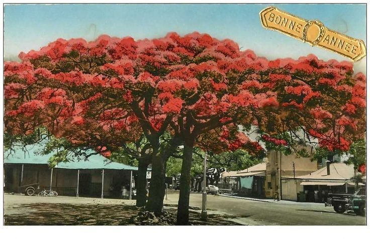 Flamboyants sur la place des cocotiers