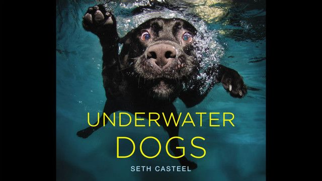 CNN.co.jp : 犬の「変顔」写真が話題に、水中でのユニークな表情 - (11/11)