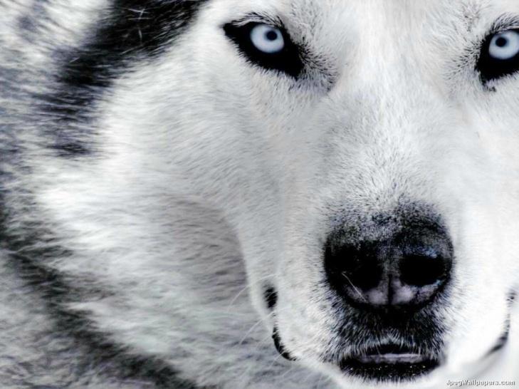 <3 Beautiful animal