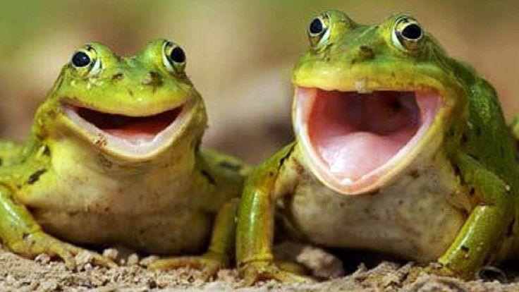 Animals Making Funny Noises Funny Animal Sounds Compilation #funny #meme #LOL #humor #funnypics #dank #hilarious #like #tumblr #memesdaily #happy #funnymemes #smile #bushdid911 #haha #memes #lmao #photooftheday #fun #cringe #meme #laugh #cute #dankmemes #follow #lol #lmfao #love #autism #filthyfrank #trump #anime #comedy #edgy