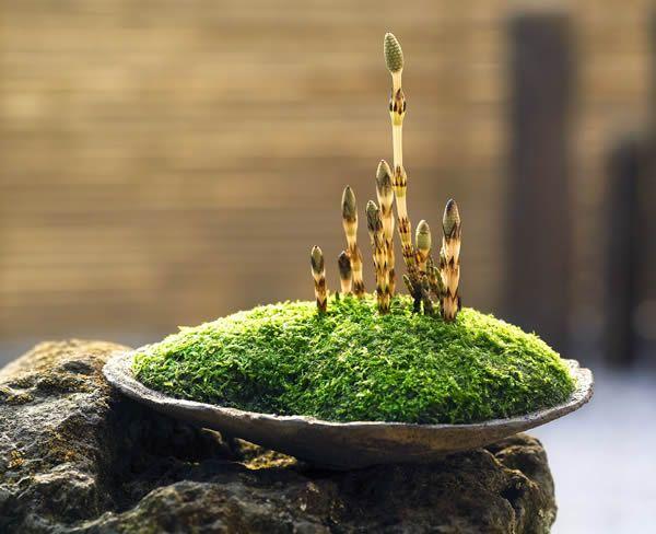 http://bonsai.shikoku-np.co.jp/gallery/57-2.jpg もっと見る