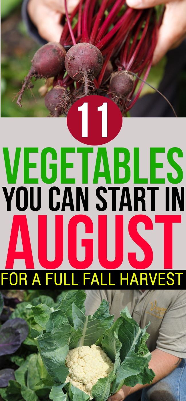 11 Vegetables You Can Start In August For A Full Fall Harvest Fall Garden Vegetables Growing Vegetables Fall Harvest
