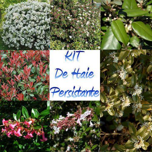 the 25 best plante pour haie ideas on pinterest arbre pour haie le jardin des fleurs and
