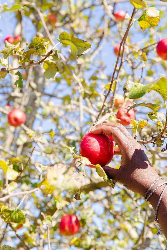 ... Links | Pinterest | Apple Galette, Caramel Apples and Salted Caramels