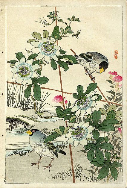 Antique Japanese woodblock prints of birds and botanicals