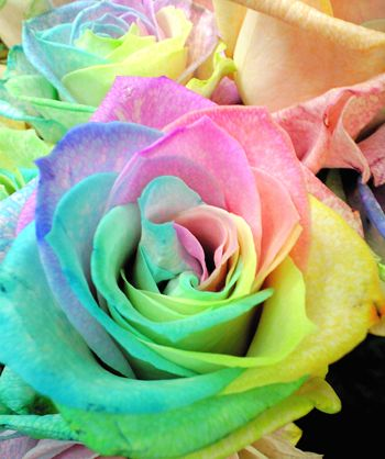 Carefully selected 4 points 【Rainbow Rose】 Awaiting standby image in love   Koibumi! Declaration of both thoughts
