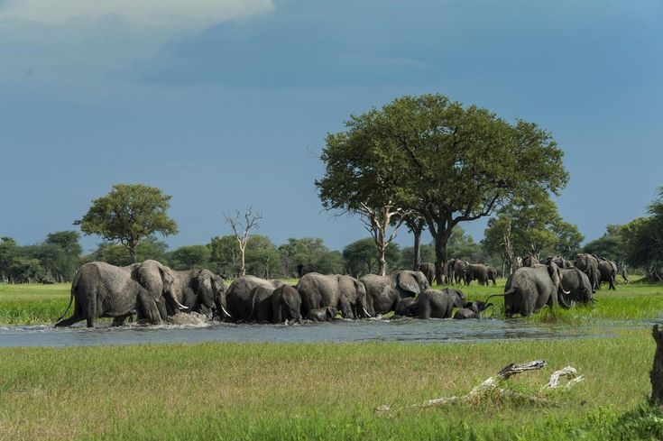 Hwange Elephant Movements – Not Just a Flight of Fashion
