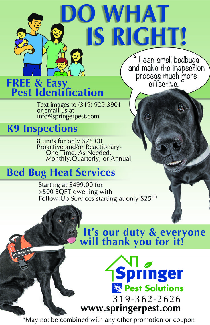 What do bed bugs look like k9 bug detectors - Hotel And Motel Managers And Landlords Alike Should Have This Done For Their Guests And Tenants