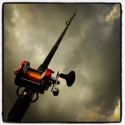 Fishing Rods - enough for everyone