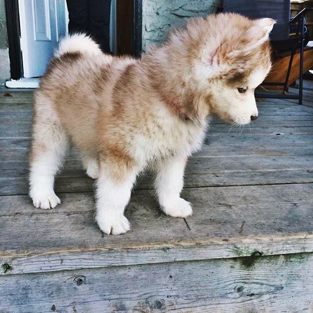 Just look at this adorable ball of fluff!