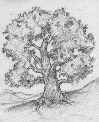 Tree drawing pencil drawings of naturedrawings