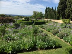 TWA-0046281 © WestPix Teucrium, lavender and iris repeat planted in Provence, France. Picture: Sabrina Hahn