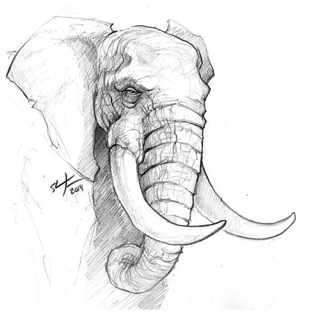 A Sunday sketch. #sketch #sketching #elephant #animals #draw #drawing #conceptart #illustration #art #sunday #practice