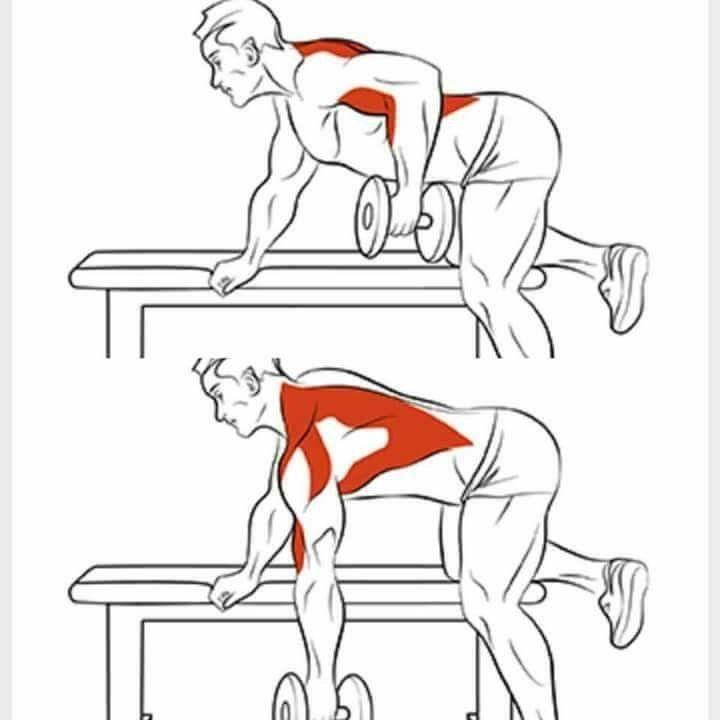 упражнения с картинками мышц действительно тоже серая