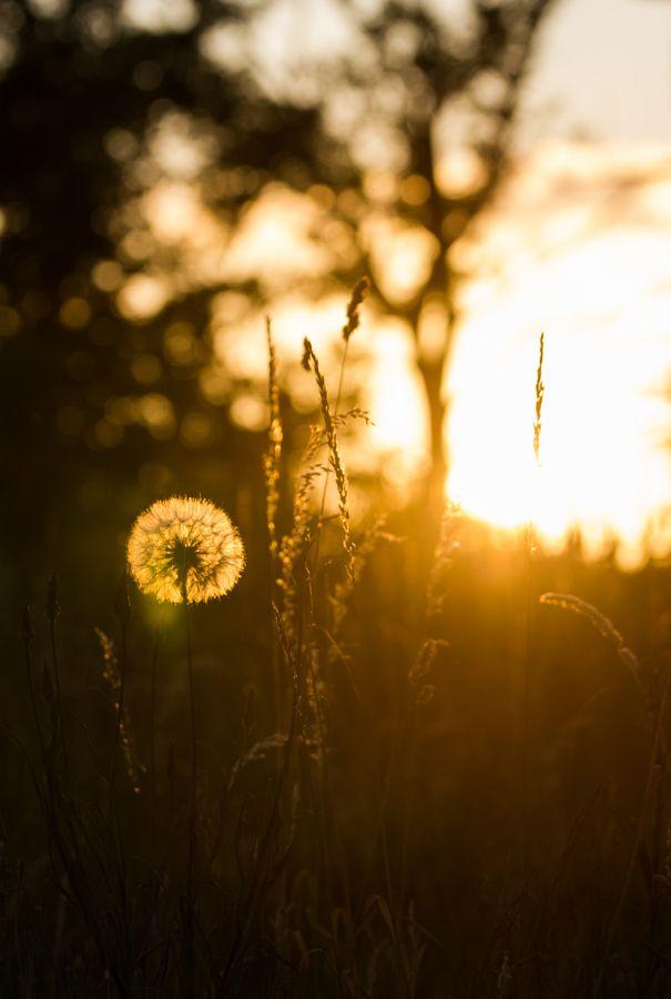 Golden Hour by David Cylke, via 500px