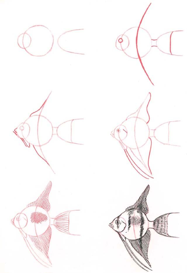 Learn to draw: Fantailed Fish - Graphic / Illustration - Art Tutorial