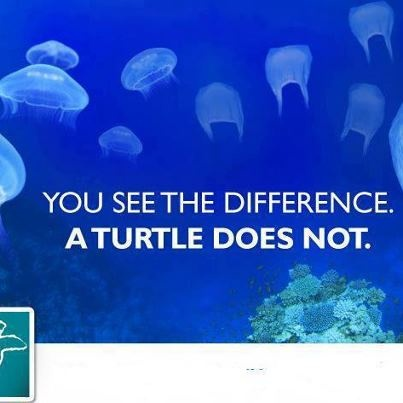 Turtles mistaken plastic bags as jellyfish. So, don't litter! #environment