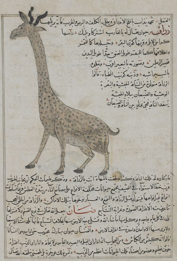 Arts of the Islamic World | Giraffe (Zurafah), from Aja'ib ...