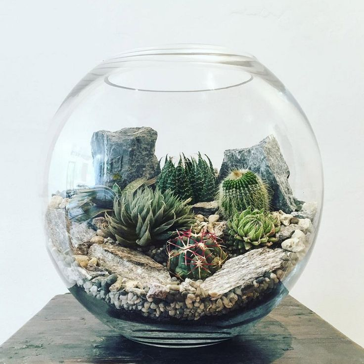 The bioattic desert world terrarium is a miniature landscape of unique cacti succulents stone and rock extremely low maintenance and very hardy