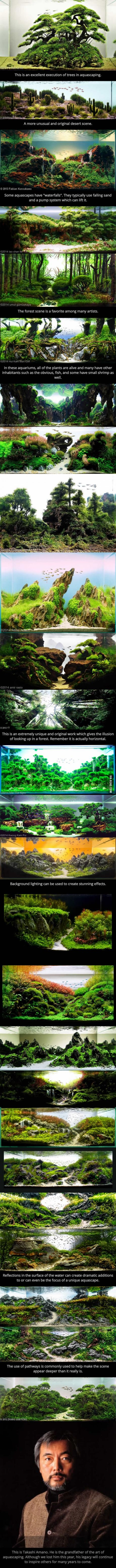 These are aquariums. This is the art of a aquascaping.