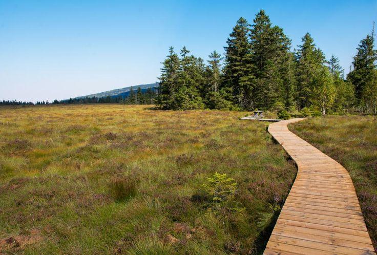 Landschaft im Harz und der Steg über das Torfhaus Moor auf dem Goetheweg