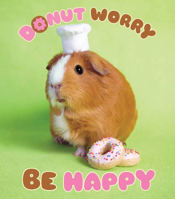 """""""Donut worry be happy!"""" says Chef MGP Prints available in our Etsy shop!"""