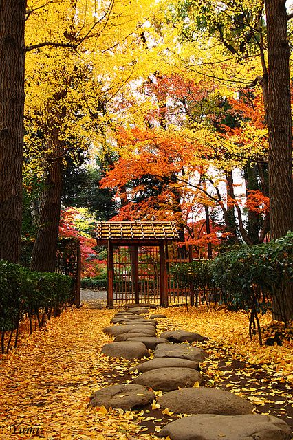Stepping Stones in Otaguro Garden, Tokyo, Japan 大田黒公園