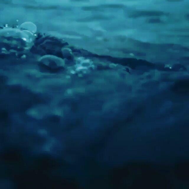 "#Repost: @sharksneedlove via @renstapp ··· "" Cheeky... and kinda quite spooky looking? I love this video so much but my god if I were a seal 😩 Video: @abc4explore 🎥 #greatwhite #shark #jaws #shark #saltlife #whiteshark #sharkweek #ocean #sea #uw #thalassophobia #underwater #surprise #dangerzone #spooky"