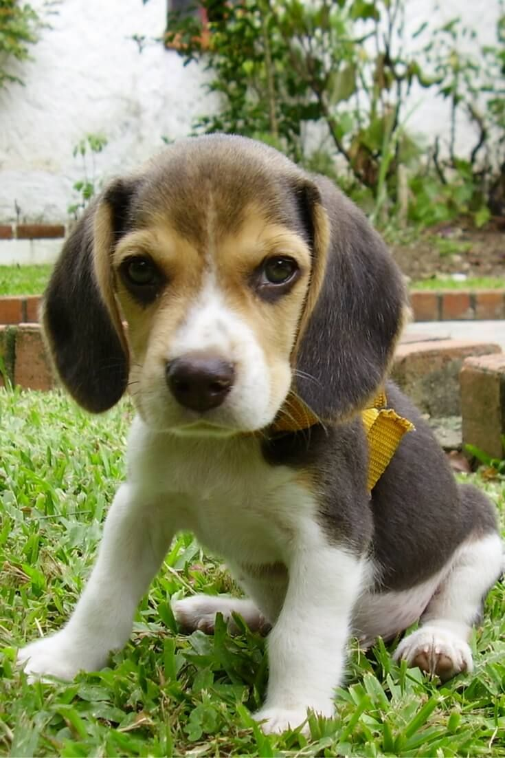 6 Best Dogs For Seniors Cute Dogs Puppies Cute Dog Pictures