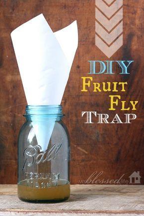 DIY Fruit Fly Trap | MyBlessedLife.net