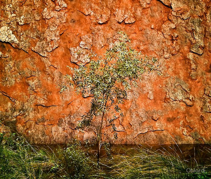 Waterhole at Uluru with Native Sappling, Central Desert, Northern Territory, Australia. Textured, tactile, red, orange, stone. A waterhole in the desert, next to the iconic, Ayres Rock, Uluru.