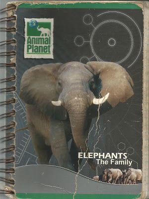 """Contracorrientes: (Apuntes y aforismos del """"Cuaderno elefante"""")"""