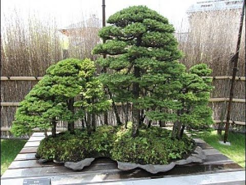 Garden  bonsai  scenary   miniature  and   waterlilies