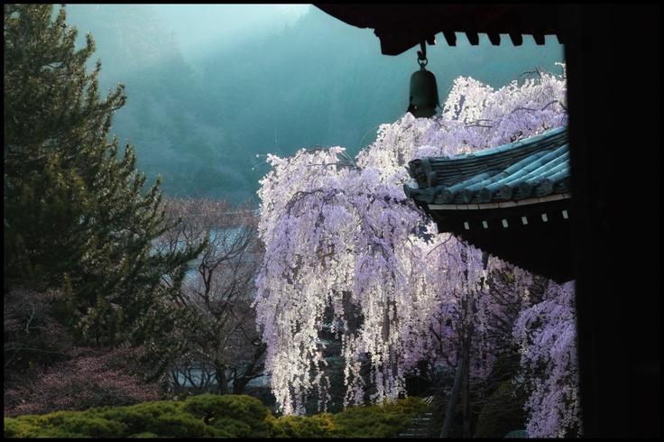 Kyoto, Japan: photo by mptfkJapan Lub, Japan Bound, Favorite Places, Sakura Hotels, Japan China, Beautiful Places, Giappone Japan, Pretty Planets, Kyoto Japan