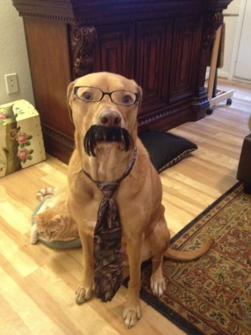 Oh Kind Sir Could You Tell me where my Dog Rufus isMustaches Dogs, Funny Dogs, Dogs Memes, Dogs Costumes, Pets, Funny Stuff, Dogs Humor, Breaking Bad, Animal