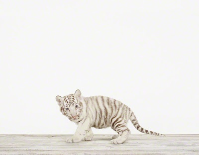 cute baby animal prints by sharon montrose nobody can do animal print like this baby animal!