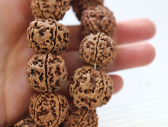 Large rudraksha beads 20-25mm  10 pieces.  Natural nut beads with a very nice grain.  Traditionally used in Hindu prayer beads, popular in