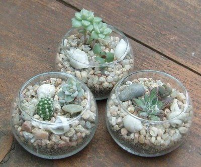 Jardines de cactus y suculentas: Terrarios en bochas de vidrio