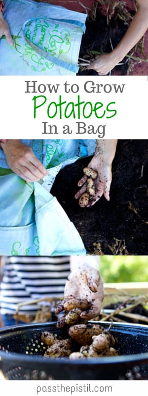 Short on space and time? Grow your own potatoes in a bag! Easy and fun.