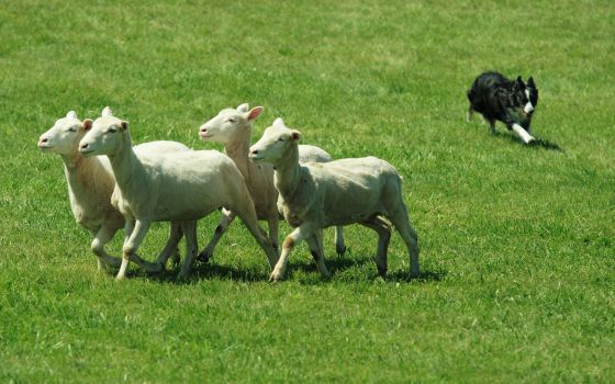 2015, año ovejuno: 10 enclaves alrededor del mundo para celebrar el año chino de la oveja