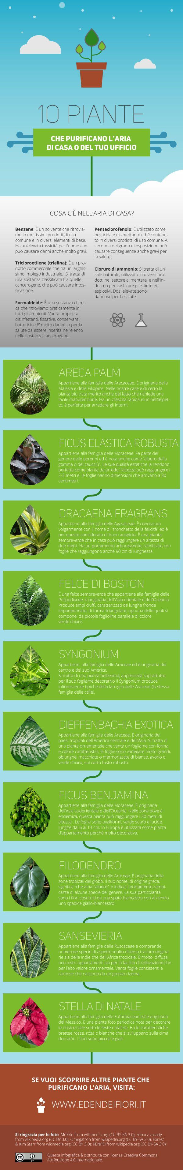 Oltre 25 fantastiche idee su piante di casa su pinterest - Calendario trattamenti piante da frutto ...